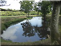 TQ4441 : Pond next to the Sussex Border Path by Marathon