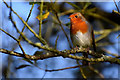 H4772 : Robin, Mullaghmore by Kenneth  Allen