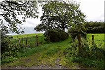 H5672 : Grassy lane, Mullaslin by Kenneth  Allen