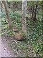 TF0820 : Double root bole by Bob Harvey