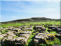NY8810 : Limestone pavement at Plat by Trevor Littlewood
