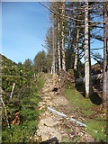 SH6441 : Woodland track above Tan-y-Bwlch station by Richard Hoare