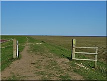 TF4548 : On the modern sea bank south of Toft Marsh by Neil Theasby