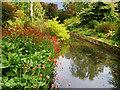 SJ7387 : Moat in Dunham Massey Garden by David Dixon