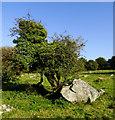 SU1467 : An afternoon at Lockeridge Dene and Piggledene (6) by Brian Robert Marshall