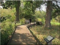 TQ1776 : Boardwalk in woodland conservation area, Kew Gardens by David Hawgood