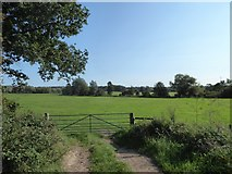TL9834 : Constable, that's a Gainsborough: field south of the B1087 at Nayland by Basher Eyre