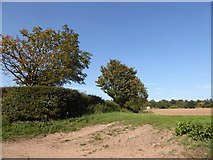 TM0335 : Constable, that's a Gainsborough: field seen from Higham Road by Basher Eyre