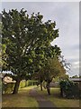 TF0820 : Evening Autumn Light by Bob Harvey