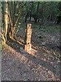TF0820 : Sunlit Sculpture by Bob Harvey