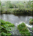 SD7186 : Wading stones under the River Dee by Andy Waddington