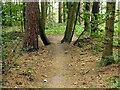 SK5951 : Forest bike trail, Watchwood by Alan Murray-Rust