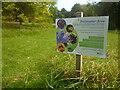 ST3087 : Information Board, Pollinator Area, Belle Vue Park by Robin Drayton
