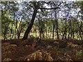 TF0821 : The edge of the wood by Bob Harvey