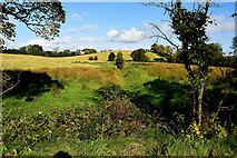 H4269 : Rough ground, Mullaghmore by Kenneth  Allen