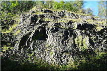 NS2301 : Reef Limestone by Anne Burgess