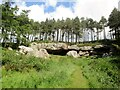 NU0535 : St  Cuthbert's  Cave.  National  Trust by Martin Dawes