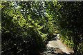 SX8651 : Dart Valley Trail approaching Old Mill Bridge by Derek Harper