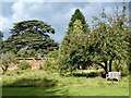 ST2885 : The Orchard, Tredegar House Gardens by Robin Drayton