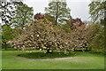 SE2954 : Blossom, Valley Gardens by N Chadwick