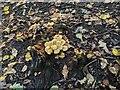 TF0821 : Stump, Leaf Litter, Mushrooms by Bob Harvey