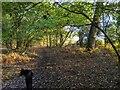 TF0821 : The Dog Days of Autumn by Bob Harvey