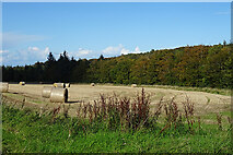 NJ4461 : Field with Bales by Anne Burgess