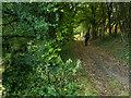 ST3956 : A fine track by Neville Goodman
