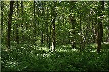 TQ5943 : Minepit Wood by N Chadwick