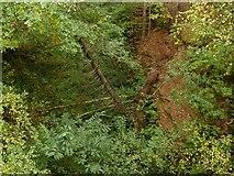 SK5852 : Bridge in Sansom Wood – 3 by Alan Murray-Rust