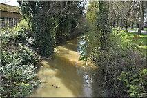 TF6219 : River Gaywood by N Chadwick