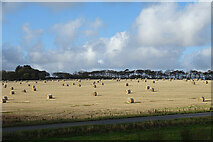 NK0058 : Bales at Nether Cortes by Anne Burgess