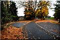 H4772 : Fallen leaves, T & F Hospital grounds by Kenneth  Allen
