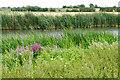 SU2498 : River Thames near Kelmscott by Bill Boaden
