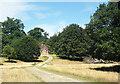SU9623 : Estate road to Shepherd's Lodge by Des Blenkinsopp
