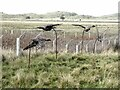NU1343 : Bird sculptures by the Lough, Holy Island by Oliver Dixon