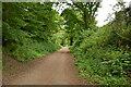 SZ5681 : Dismantled railway line by N Chadwick