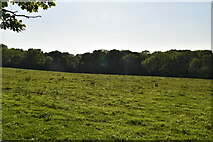 TQ6244 : View to Boys Wood by N Chadwick