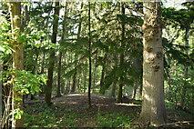 TQ6042 : Woodland by N Chadwick