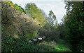 NZ1646 : Pipeline passing through woodland by Trevor Littlewood