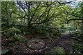 SK2579 : Millstone and Oak, Padley Gorge by Brian Deegan