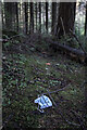 J3432 : Discarded face mask, Tollymore Forest Park by Rossographer