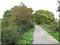 SZ5090 : Red Squirrel Trail near Newport by Malc McDonald