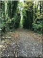 SU5174 : Down on the path by Bill Nicholls