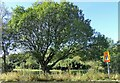 NZ1750 : Roadside tree on the A6076 by Robert Graham