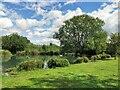 TQ0207 : Arundel Wetlands Centre by PAUL FARMER