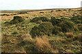 SX6770 : Gorse on Holne Moor by Derek Harper