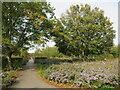 TQ3377 : Autumn flowers in Burgess Park by Malc McDonald
