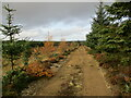 NS7036 : Forestry track near the South Feeshie Burn by Alan O'Dowd