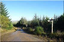 NJ4750 : Waymarker in Balloch Wood by Anne Burgess